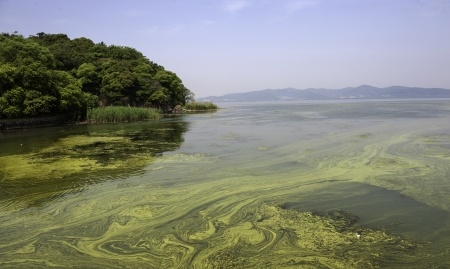 24802529 - the polluted water of taihu lake by cyanobacteria bloom in jiangsu province of china