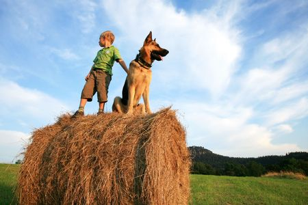 4505407 - little boy playing with the dog (alsatian) on the meadow - summer in the country during summer holidays.