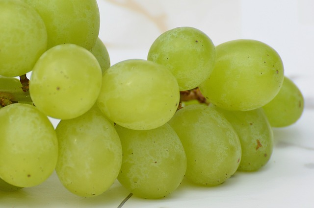 grapes-1281908_640_02.09.16_Alexas_Fotos