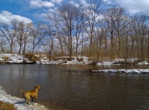 14704537 - last snow on the bank of small river