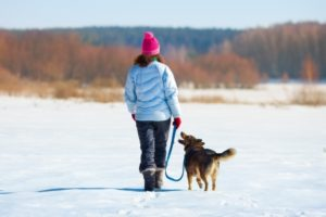 23435387 - young woman with her dog walking on the snowy field