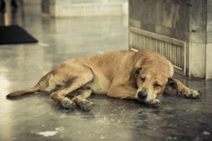 26005927 - homeless and sick dog
