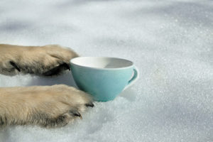 "55137838 - an empty bowl placed between the dog""s paws laid on the snow, concept of hunger"